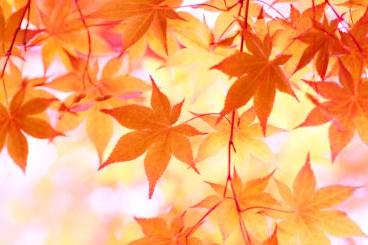 秋のお悩み