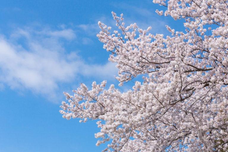 春のお悩み